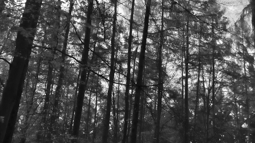 bosque_grises
